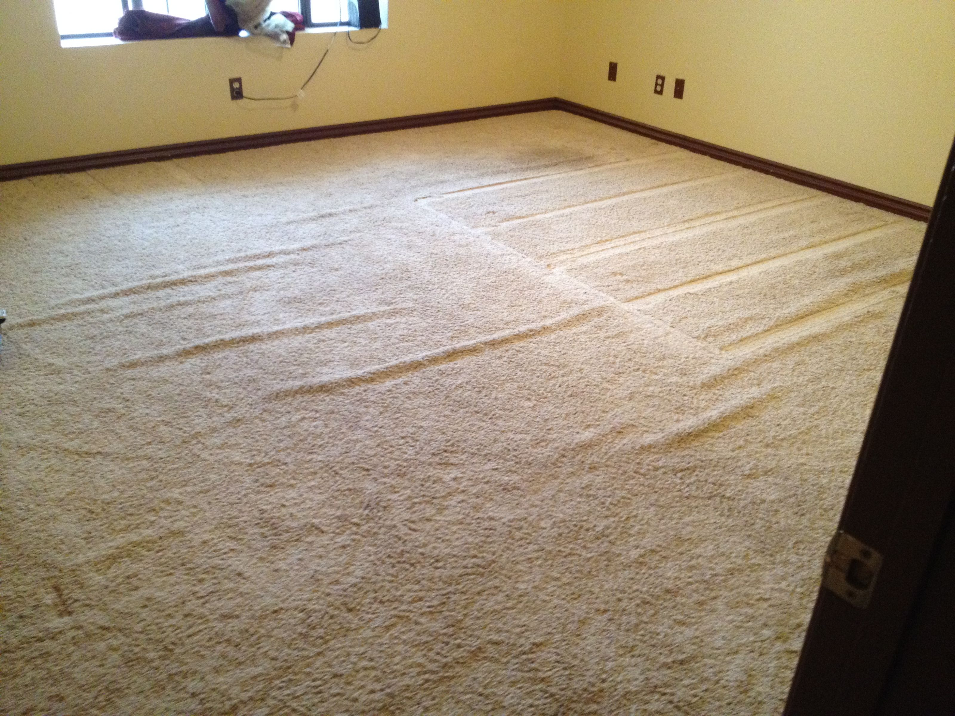 Your Carpet And Then We Work Diligently To Get You The Results That Want Never Cut Corners Re So Confident In Our Guarantee